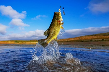 Why Do Bass Jump Out Of The Water?