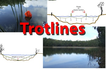 fishing trotline setups