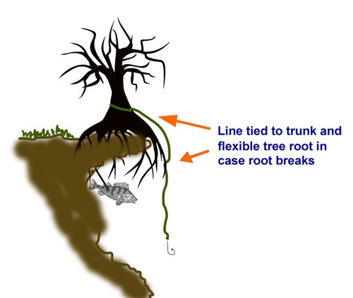 Limb line tied to tree root in water.