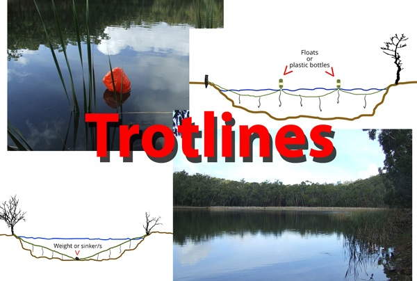 Survival fishing trotline set ups.