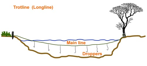 Survival fishing trotline