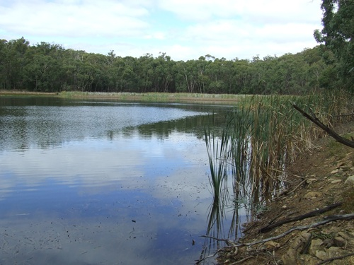 Survival fishing weedy area to fish.